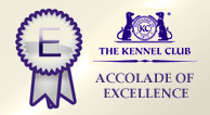 Altside Afghans are a  Kennel Club Accolade of Excellence Award Winner